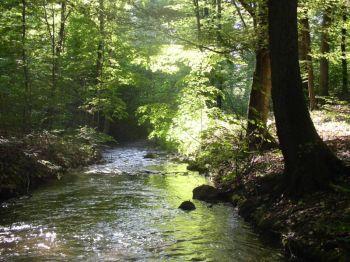 rzeka S³upia