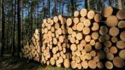 Informacja dla właścicieli lasów prywatnych uszkodzonych w wyniku nawałnicy