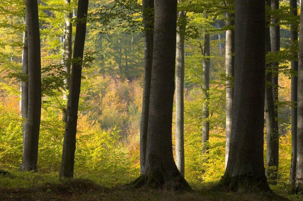 Informacja o wyga¶niêciu uproszczonych planów urz±dzenia lasu