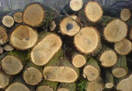 Og³oszenie o sprzeda¿y drewna ¶redniowymiarowego