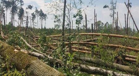 Wa¿na i informacja dla w³a¶cicieli lasów uszkodzonych w wyniku nawa³nicy w 2017 r.