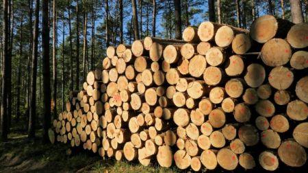 Informacja dla w³a¶cicieli lasów prywatnych uszkodzonych w wyniku nawa³nicy