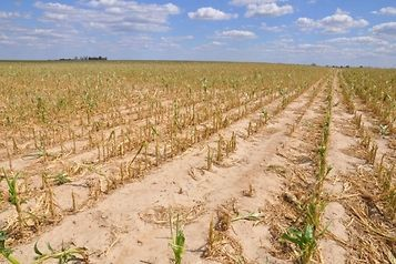 Informacja dotycz±ca suszy na terenie województwa pomorskiego 2018